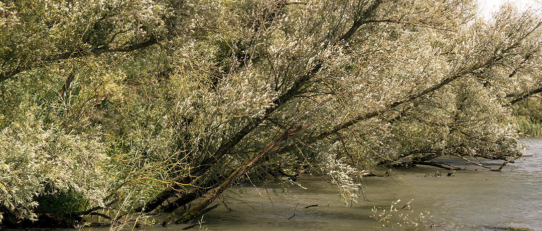 Samenwerken aan water in Midden- en West-Brabant